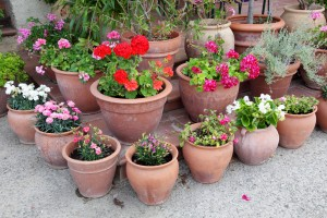 container gardening in hattiesburg ms