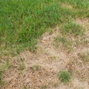 brown spots in lawn care
