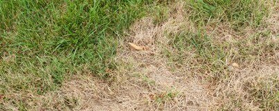 3 Steps to Repair Problem Spots In Your Lawn