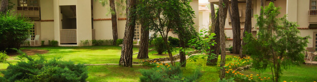 Landscaping Tips for a Shaded Lawn & Garden